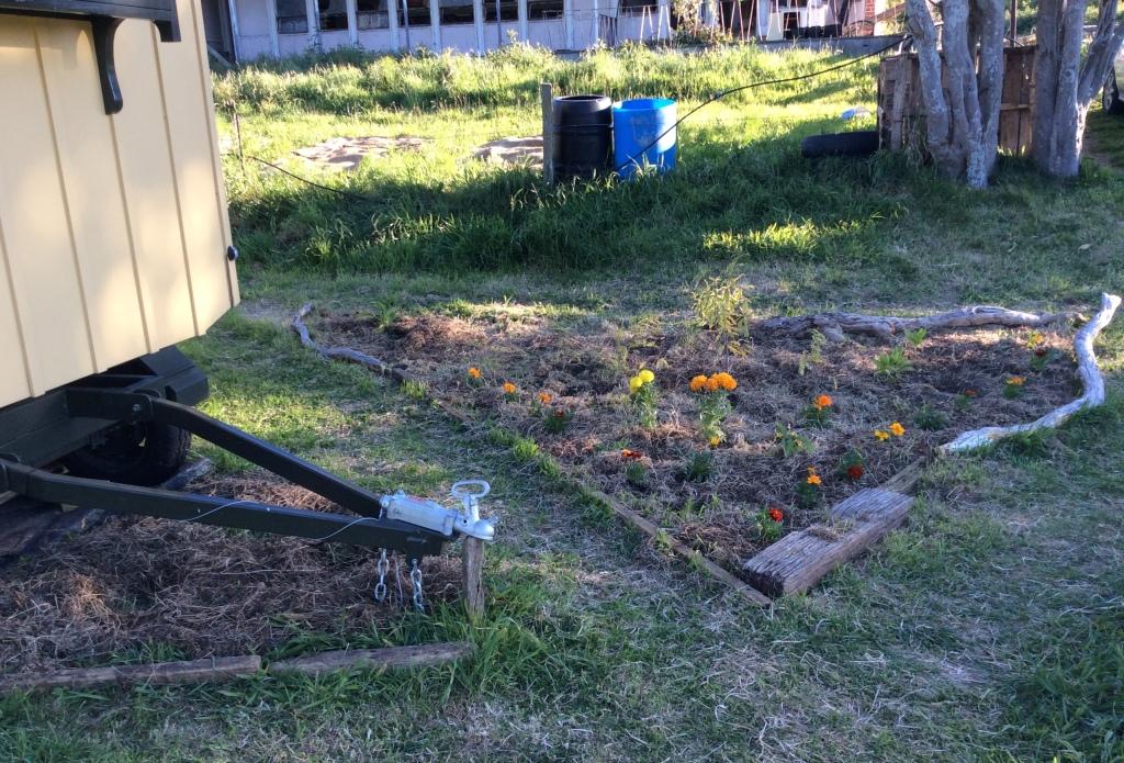New garden 1