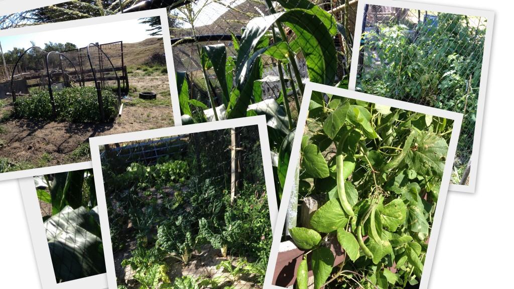 Vege garden collage jan 2018