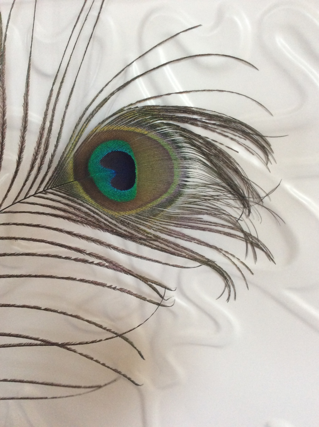 Peacock eye feather closeup